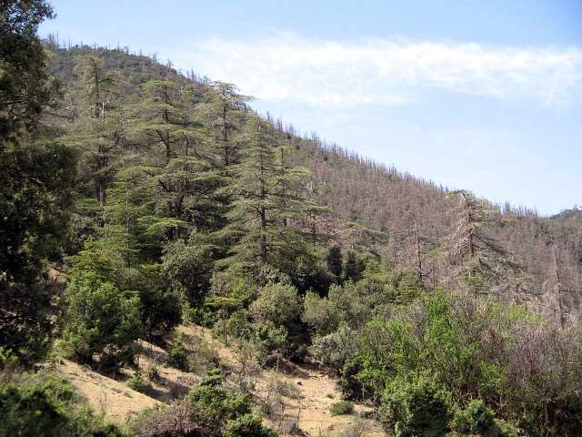 stratégie forestière