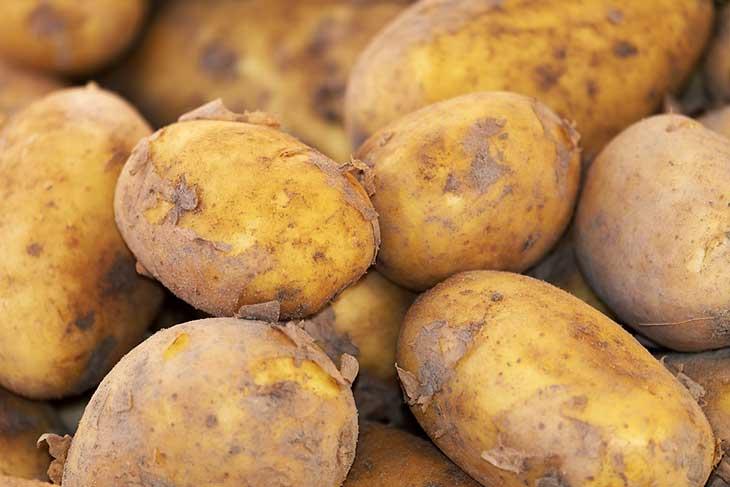 Laghouat: plus de 100 000 qx de pomme de terre attendus