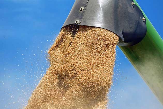 Affaire du blé avarié importé de Lituanie : Plusieurs responsables privés de leurs passeports