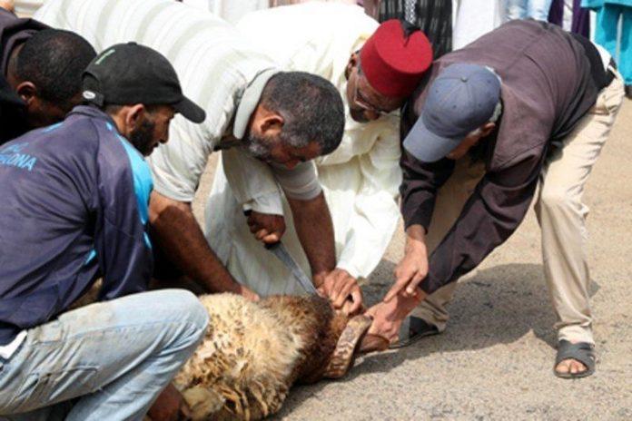 Suspense autour du Sacrifice de l'Aïd El Adha