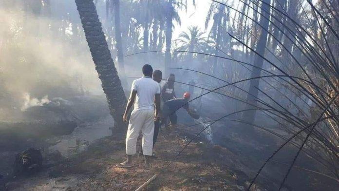 Ouargla: plus de 2 300 palmiers ravagés par le feu