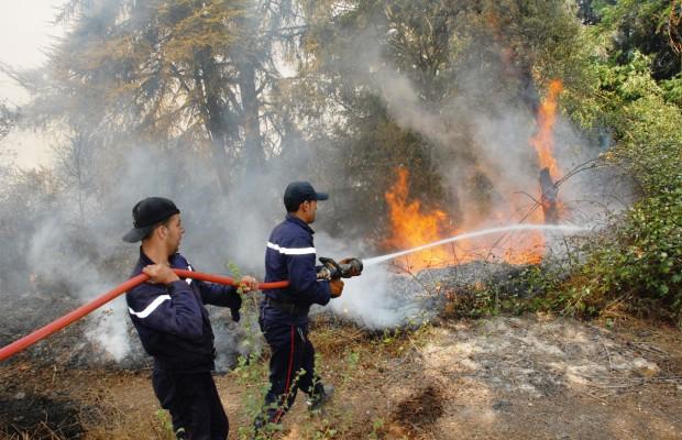 Incendies des forêts de Gouraya: arrestation de 19 individus